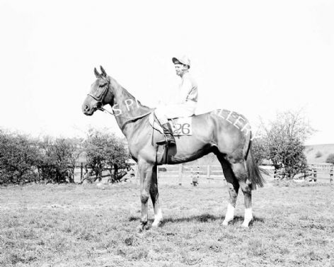 Racehorse Red Alligator with Jockey Brian Fletcher